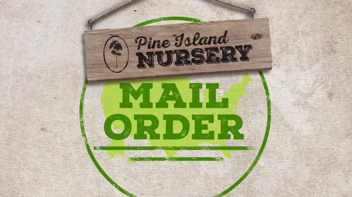 Pine Island Nursery – Mail Order